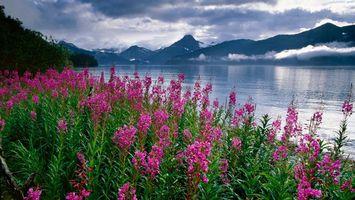 Фото бесплатно берег, цветы, розовые, река, горы, облака