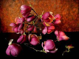 Фото бесплатно цветы, ветки, натюрморт