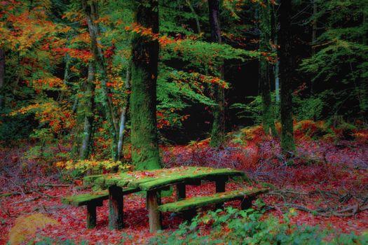 Бесплатные фото осень,лес,деревья,природа,скамейка,столик,пейзаж