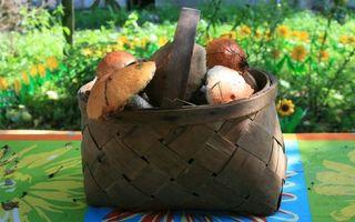 Бесплатные фото стол,корзина,грибы,фон,трава,цветы