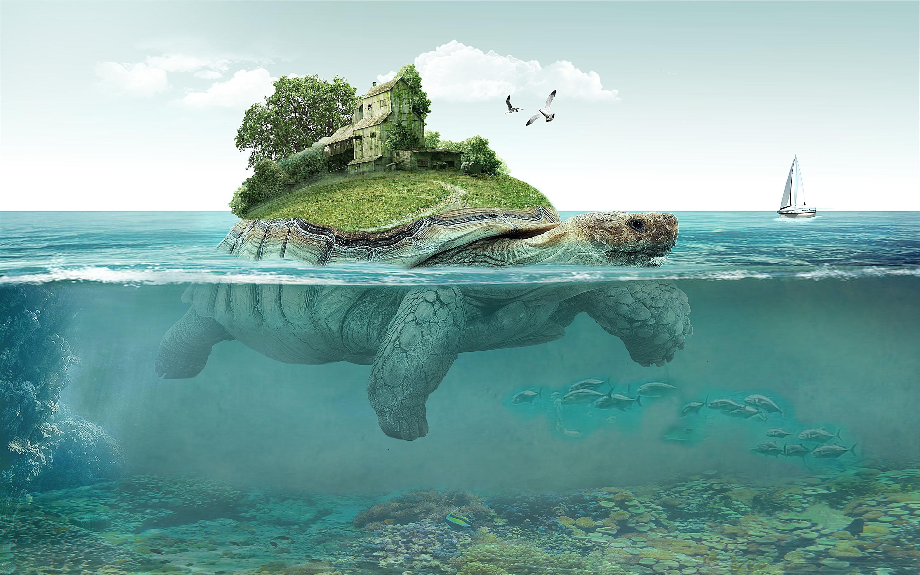 Обои море, черепаха, остров, art