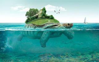 Бесплатные фото море,черепаха,остров,art