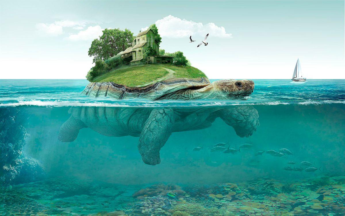 Фото бесплатно море, черепаха, остров, art, фантастика