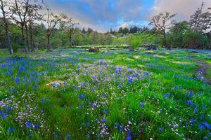 Бесплатные фото поле, цветы, деревья, пейзаж