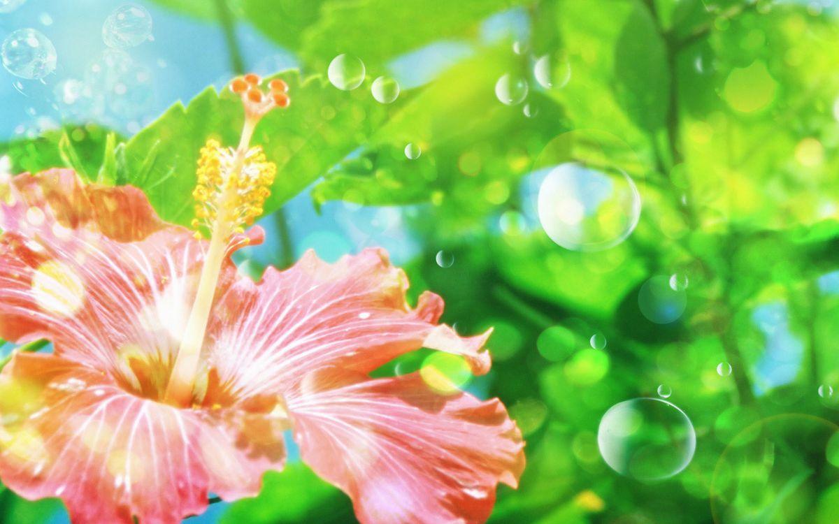 Фото бесплатно цветок, лепестки, пестик, тычинки, листья, пузыри, цветы