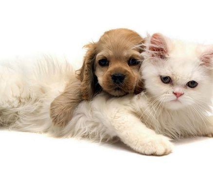 Бесплатные фото котики,собачки,друзья наши меньшие,зверушки