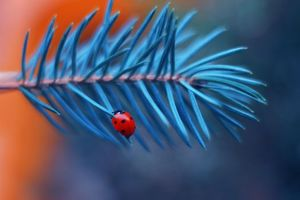 Photo free ladybug, insects, plant