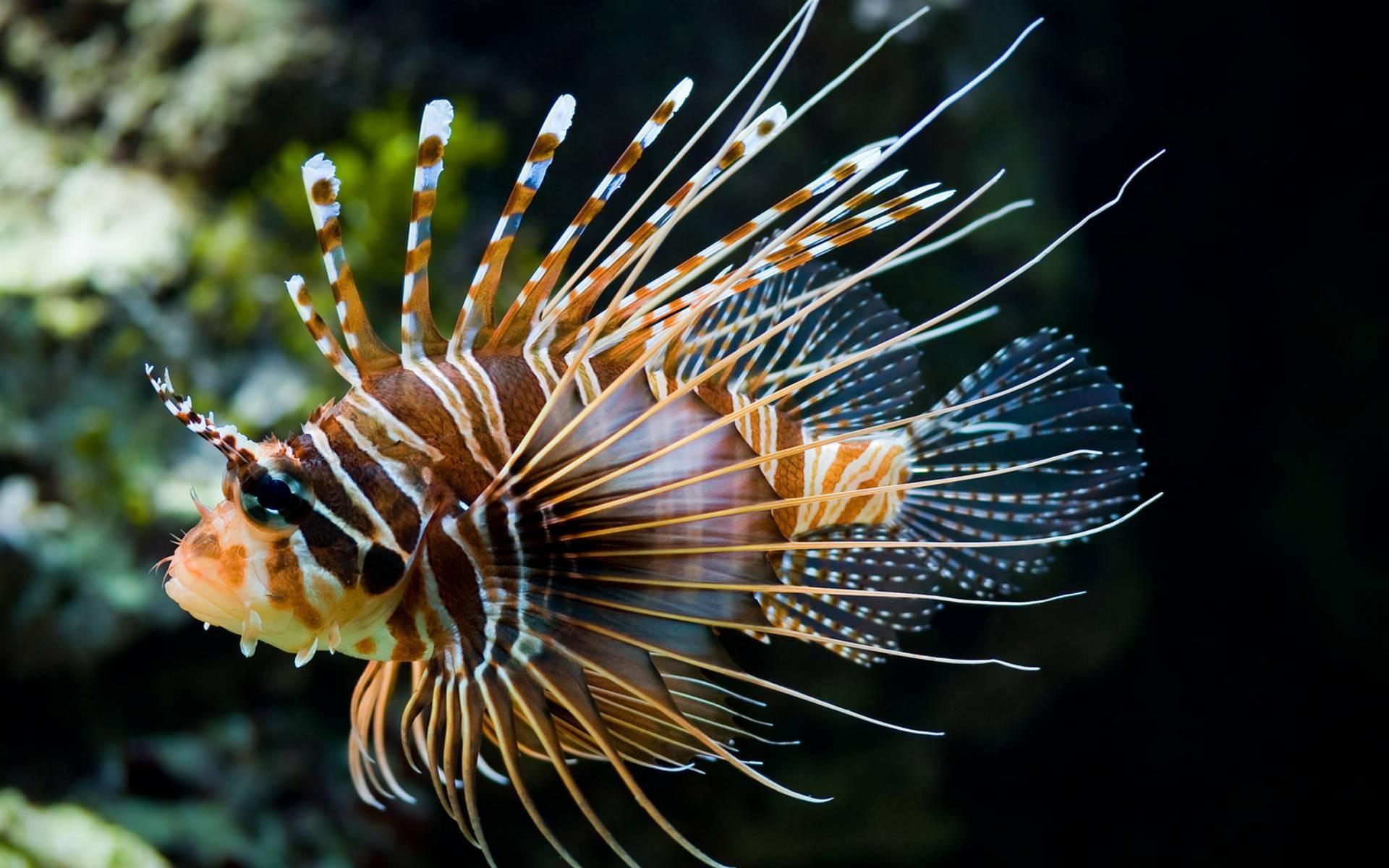 обои рыба, цветная, плавники, хвост картинки фото