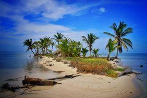 Заставки пальмы, панама, остров
