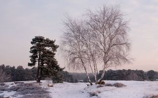 Бесплатные фото зима, трава, иней, снег, деревья, сосна, береза