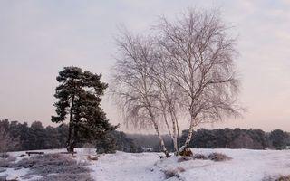Бесплатные фото зима,трава,иней,снег,деревья,сосна,береза