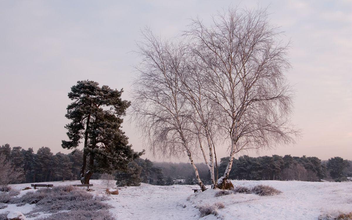 Фото бесплатно зима, трава, иней - на рабочий стол