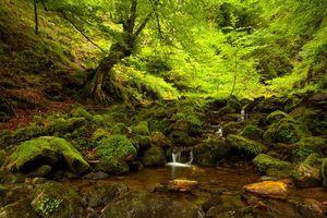 Бесплатные фото лес,деревья,речка,ручей,водопад,природа