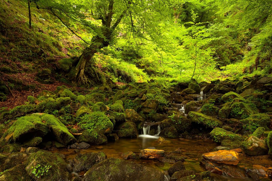 Free photo forest, trees, river - to desktop