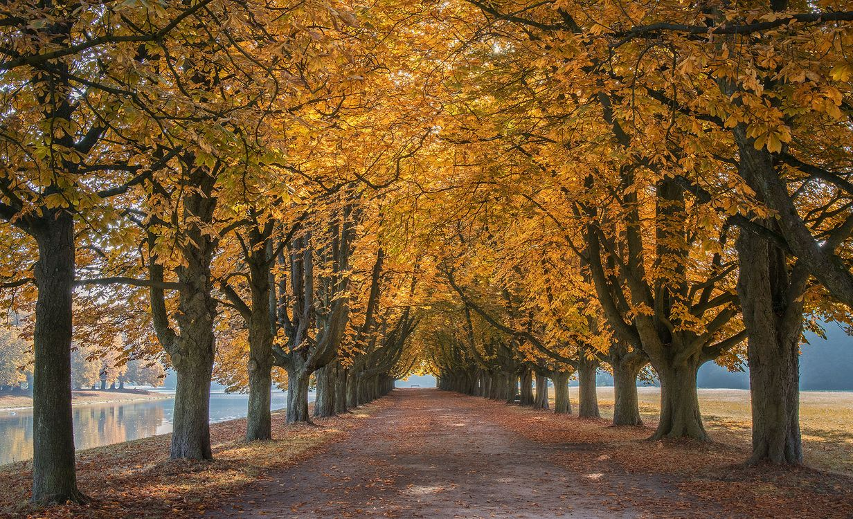 Фото бесплатно осень, дорога, деревья, поле, река, пейзаж, пейзажи
