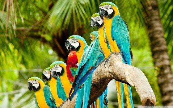 Бесплатные фото попугаи,ара,цветные,перья,крылья,хвосты,клювы,пальмы