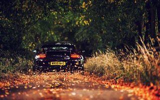 Бесплатные фото порше,черная,фонари,дорога,скорость,листва,трава
