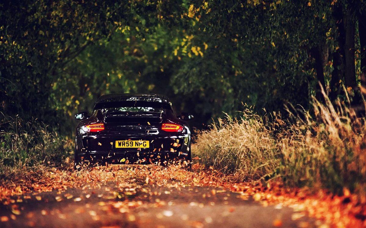 Фото бесплатно порше, черная, фонари, дорога, скорость, листва, трава, деревья, машины
