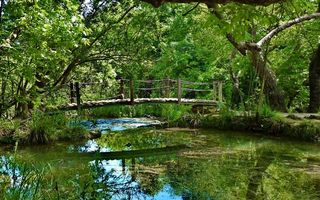 Бесплатные фото мостик,лес,ручей