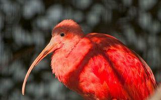 Бесплатные фото птица,длинный клюв,перья,розовые,фон мутный