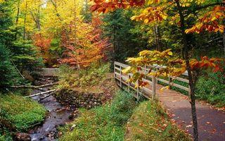 Фото бесплатно ручей, коряги, камни, трава, деревья, мостики, тропинка