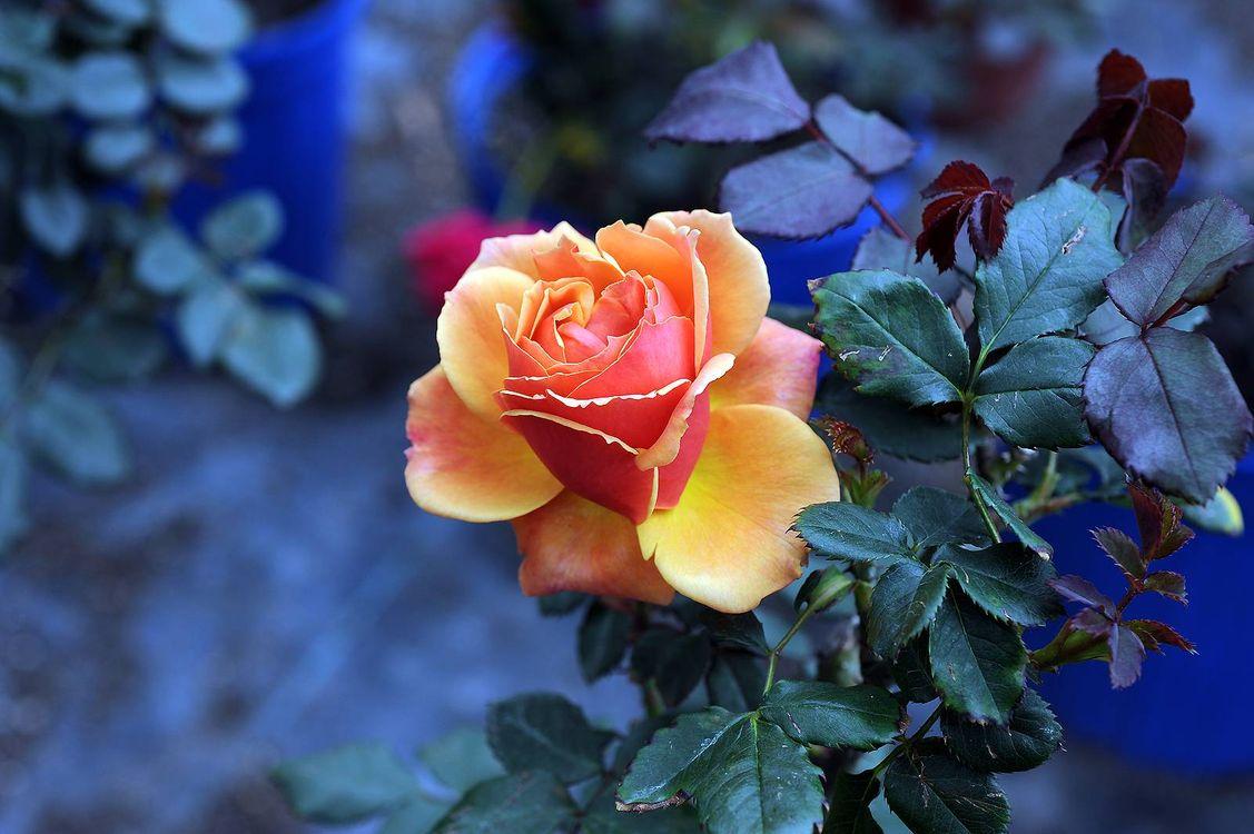 этом покажи мне фото цветы розы фотограф свадьбу