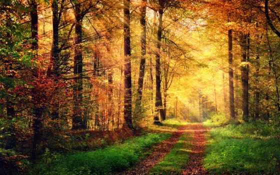 Photo free forest, landscape, sun rays