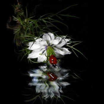 Бесплатные фото божья коровка,цветок,отражение