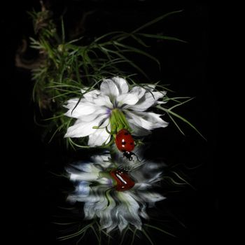Заставки божья коровка, цветок, отражение