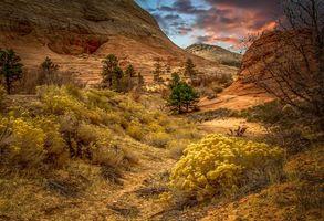 Бесплатные фото Парк Зайон,штат Юта,США,горы,скалы,деревья,цветы