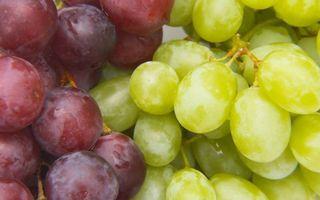 Бесплатные фото ягода,виноград,бордовый,зеленый,грозди,сорт