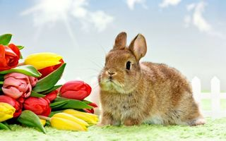Заставки кролик, морда, уши, лапы, шерсть, тюльпаны, букет