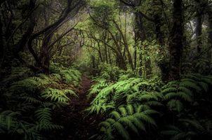 Фото смотреть тропинка, лес бесплатно