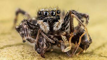 Заставки паук, черный, глаза