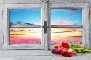 Бесплатные фото весна,окно,рама,пасха,тюльпаны