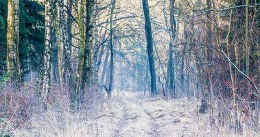 Бесплатные фото зима, лес, деревья, дорога, пейзаж