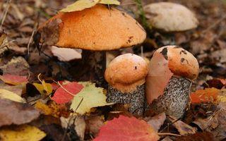 Обои осень, грибы, шляпки, ножки, листья сухие