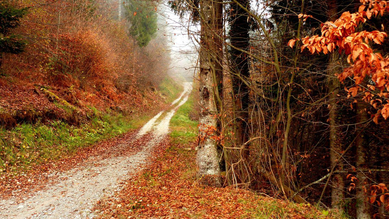 Обои осень, лес, деревья, дорога, пейзаж на телефон | картинки пейзажи