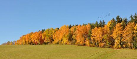 Фото бесплатно осень, поле, деревья, пейзаж, панорама