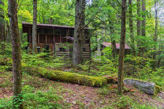Фото бесплатно лес, деревья, домики