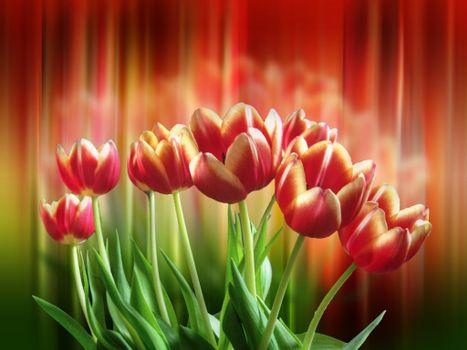 Заставка цветы, флора на монитор
