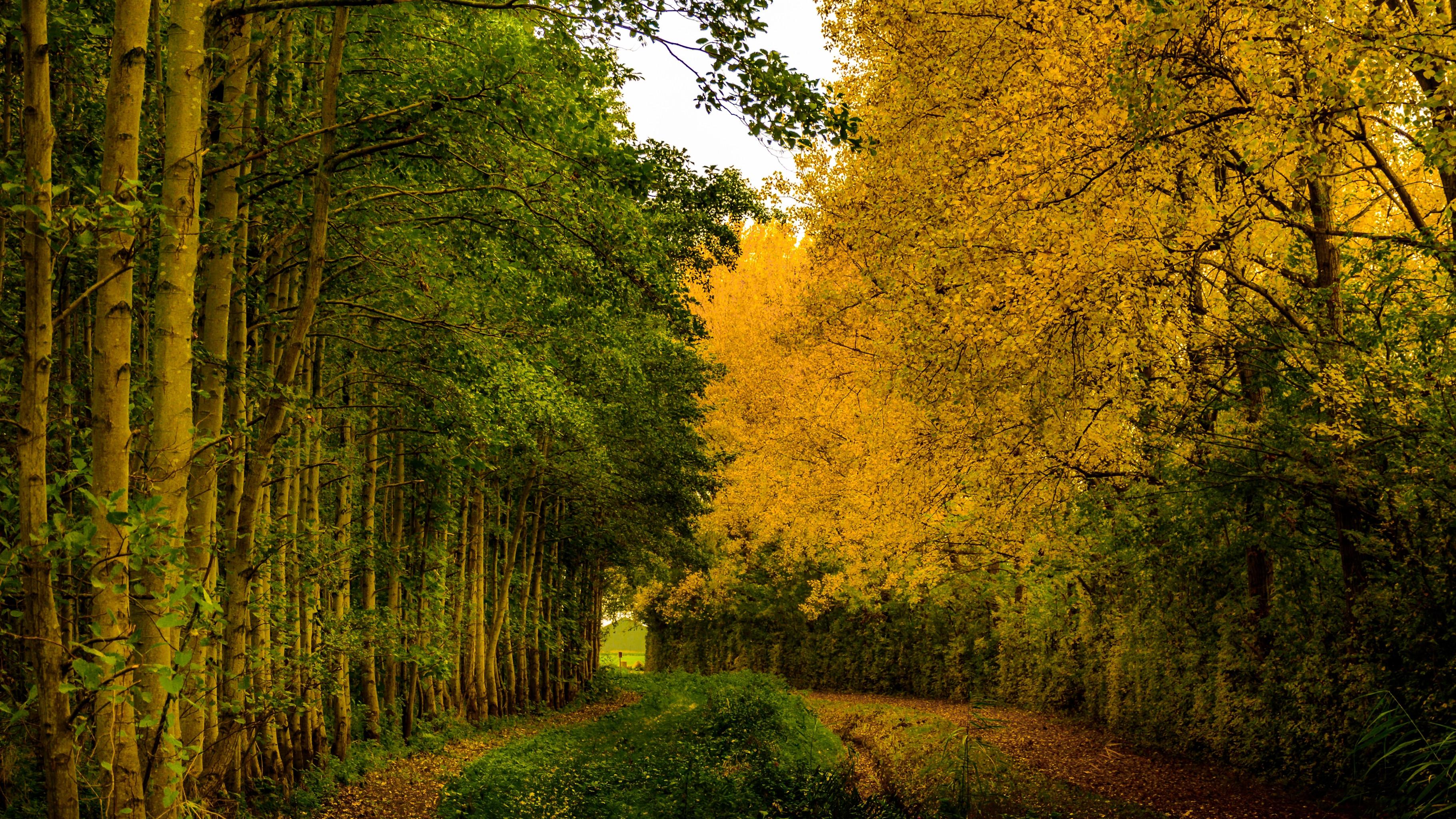 Осень, лес, деревья