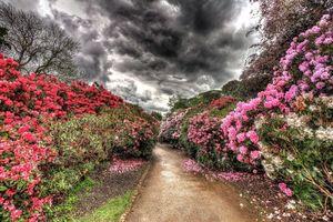 Обои Тропинка, рододендрон, шторм, тучи, templenewsam, Лидс, Йоркшир, цветущий кустарник