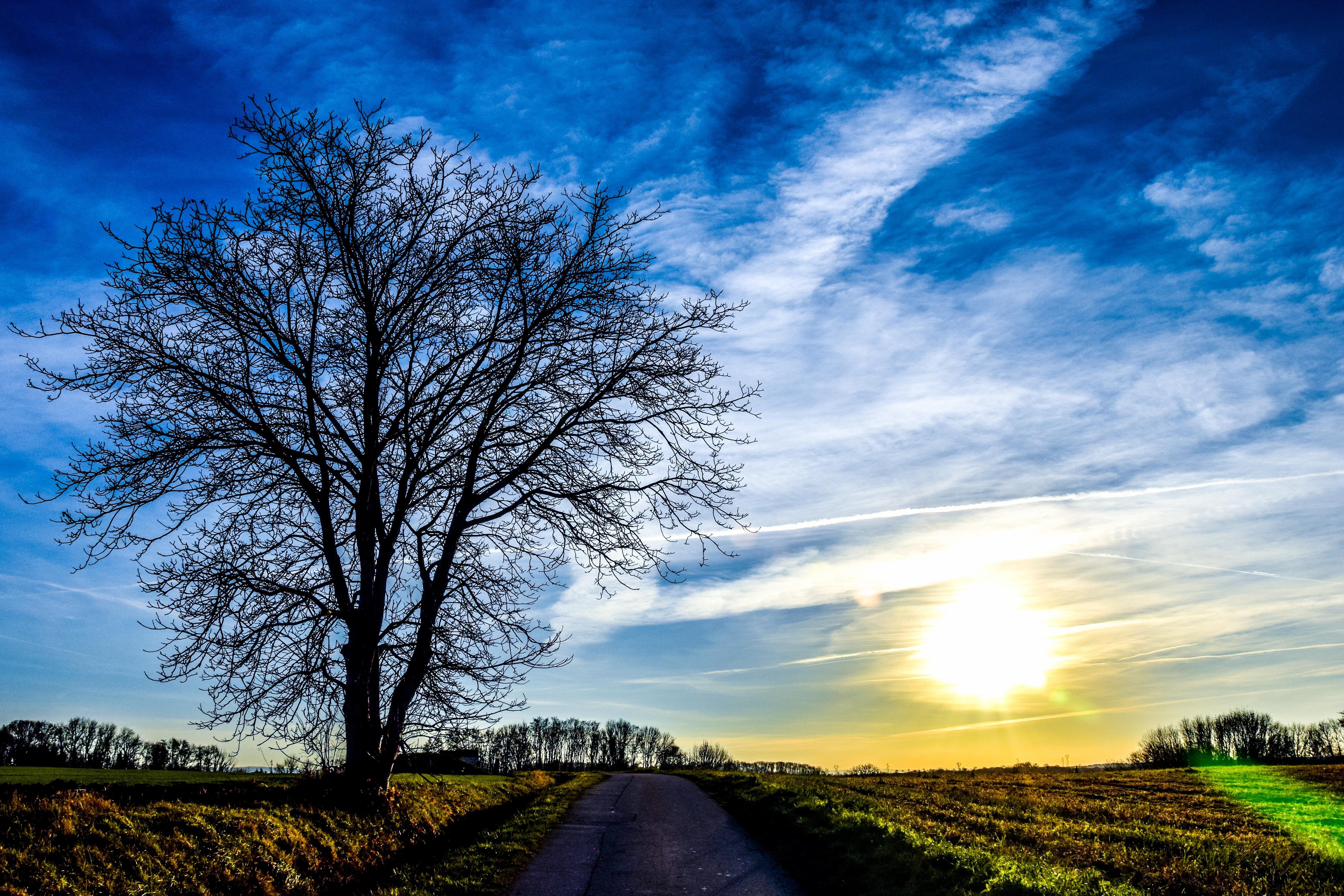 обои закат, дорога, поле, дерево картинки фото