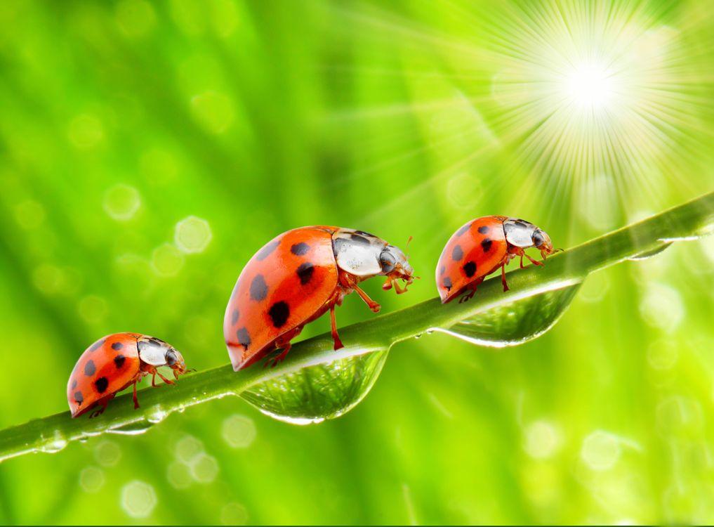 Free photo greens, water, macro - to desktop