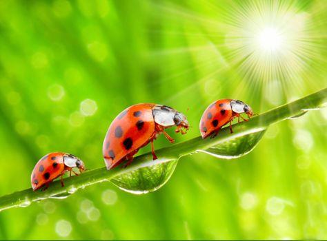 Photo free greens, water, macro