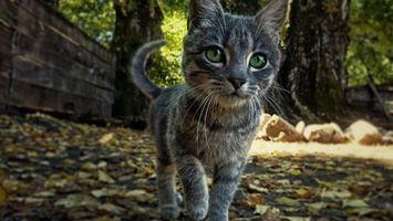 Бесплатные фото котенок,морда,глаза зеленые,лапы,хвост,шерсть,улица