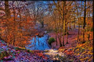Бесплатные фото осень,парк,деревья,речка,водоём,природа,пейзаж
