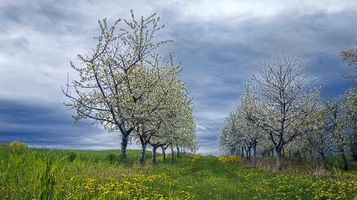 Бесплатные фото поле, деревья, весна, цветение, пейзаж