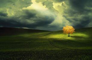 Бесплатные фото закат,поле,дерево,пейзаж
